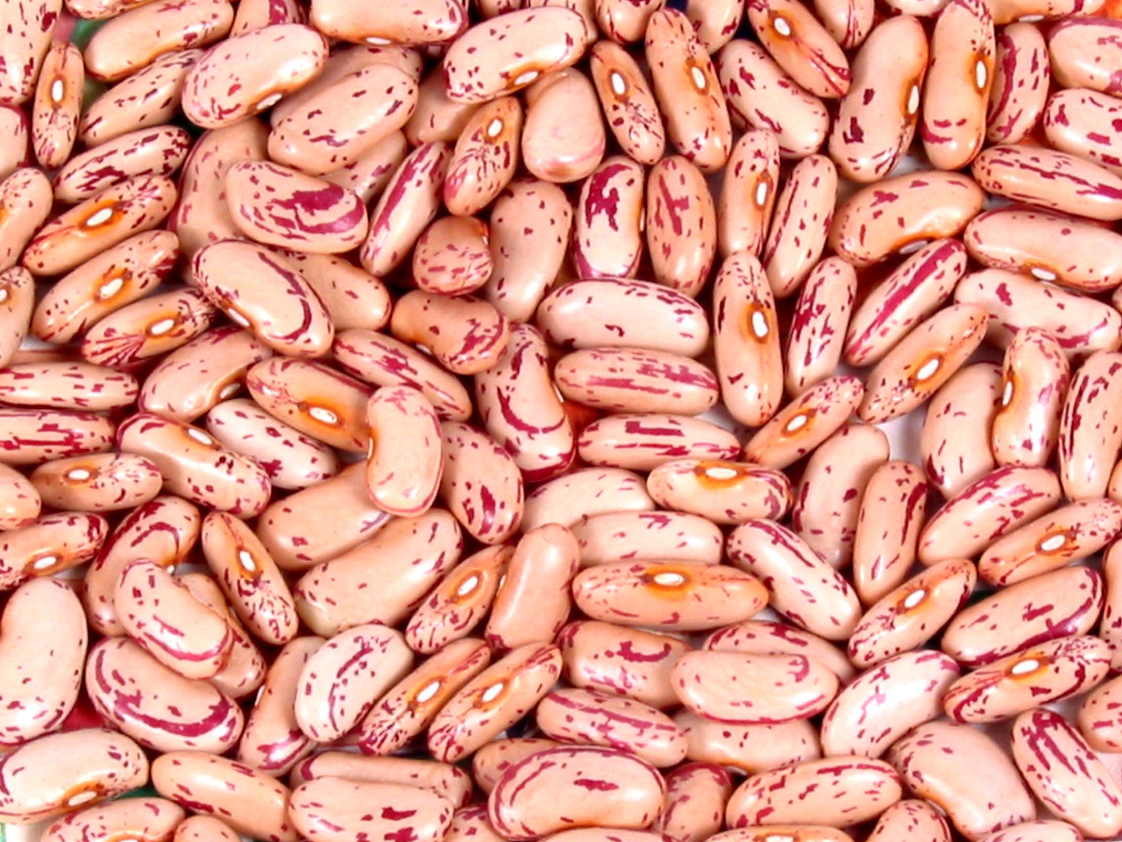 RED SPECKLED BEANS