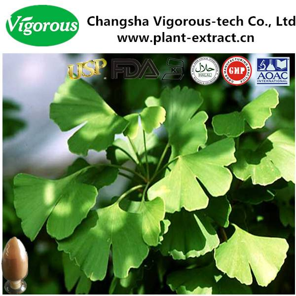 GMP manufacturer pure natural free samples organic flavone ginkgo biloba extract