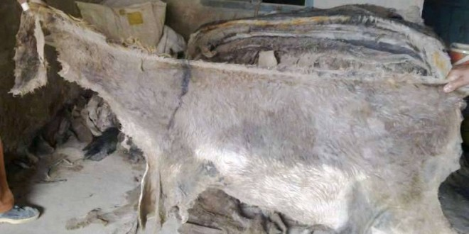 100% Wet and Salted Donkey Hides and Cow Hides for Sell