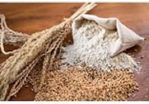 best quality grade wheat flour whole sale price from manufacturer