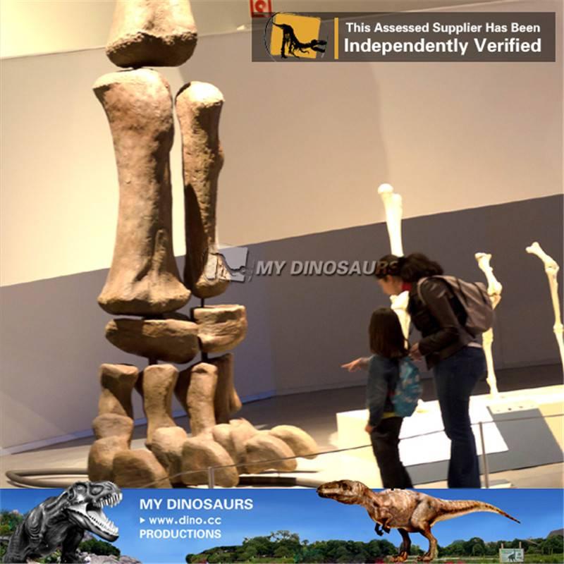 Museum replica animal fossil