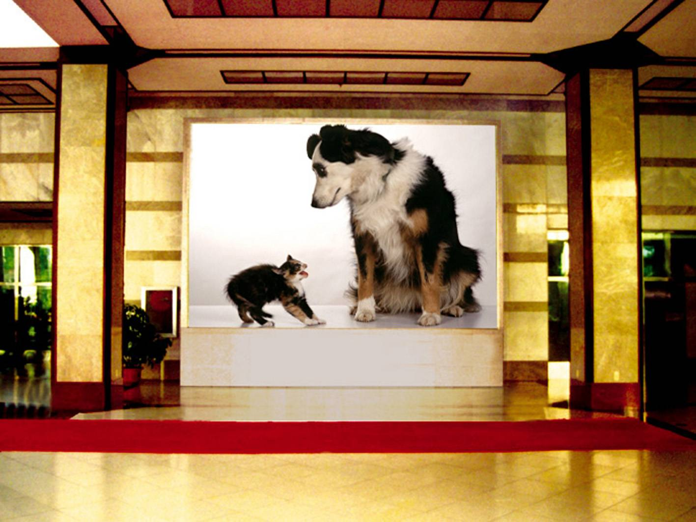 Full color p6 indoor led display screen