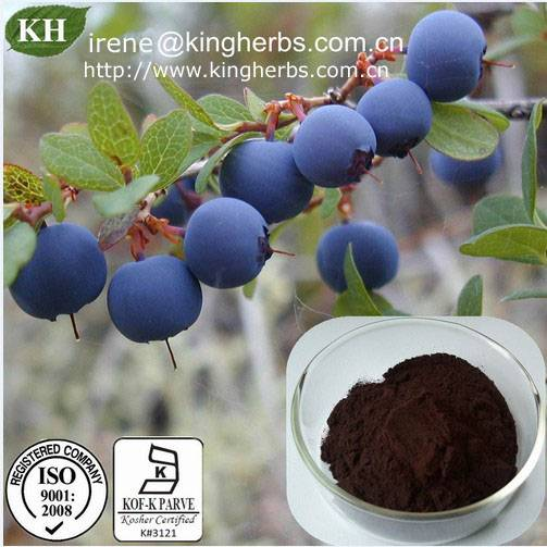 China Blueberry Extract5%, 10%, 20%, 30% anthocyanidin;  4%, 10% polyphenol