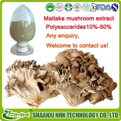 GMP Factory Supply high quality natural and pure maitake mushroom extract