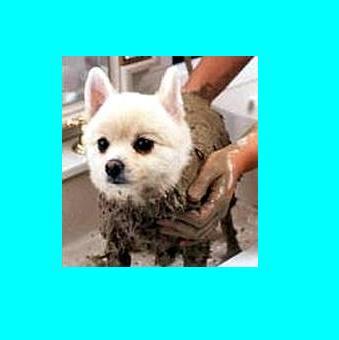 Pets Therapy Dead Sea Black Mud Mask