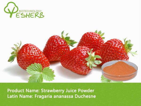 free sample high quality organic strawberry fruit extract