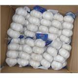 pure white garlic fresh new crop