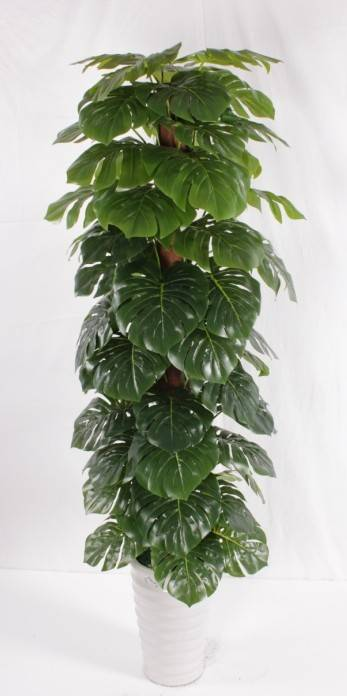2014 Natural Look Artificial Plants Scindapsus (small trees) In Stock