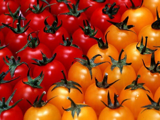 fresh yellow cherry tomatoes / diced frozen tomato/ Grape Tomato/ Tomato Paste in Drums Brix 36-38%/