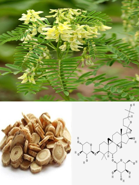 Astragaloside IV 98% HPLC, CAS No.: 84687-43-4, Astragalus Root Extract, 100% NATURAL
