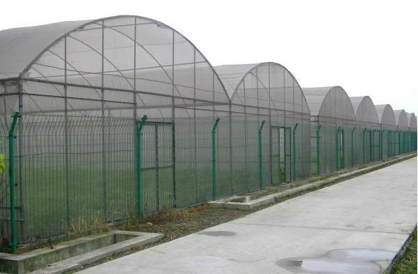 Film Greenhouse (BZ-FG-1405)