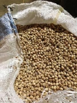cardamom (white,round,dried, 100% natural and organic)