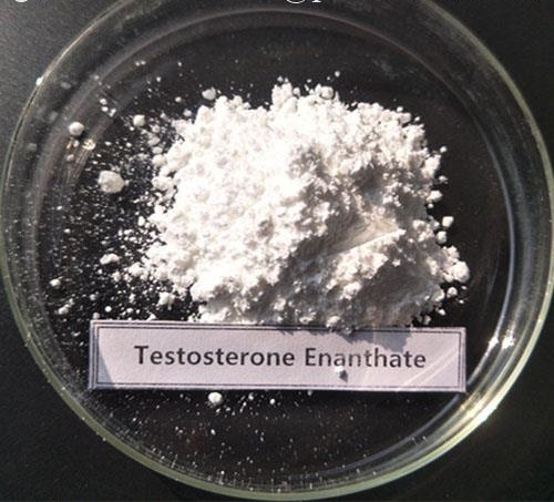 Testosterone Enanthate Intermediate Powder CAS 315-37-7
