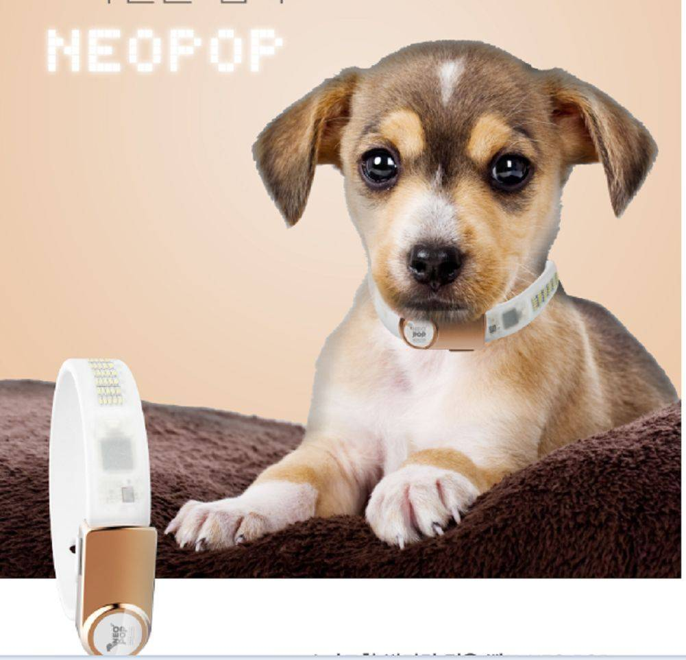 Korea Neopop LED & Buckle PET Smart Band Only for Dogs