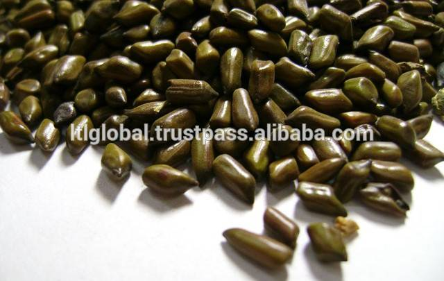 BEST PRICE FOR CASSIA TORA SEED WITH GOOD QUALITY