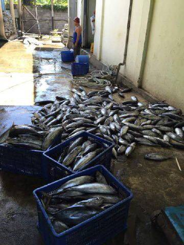 variety frozen /live seafood , treatment Aquatic products