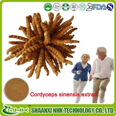 GMP standard China supplier high quality cordyceps sinensis extract