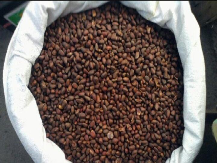 Siberian Premium Pine nuts