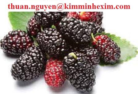 Frozen Mulberry fruit juice concentrate