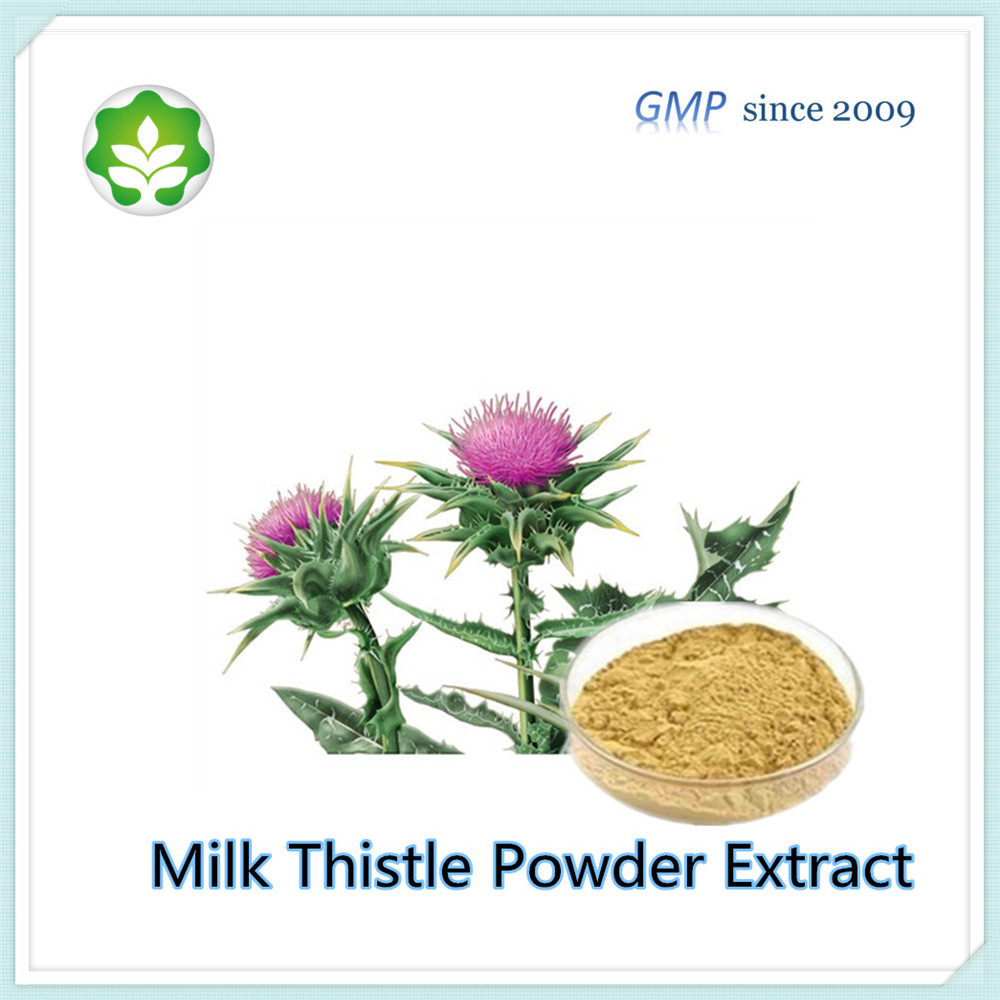 milk thistle powder extract natural