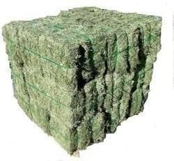 Top Quality Alfafa Hay for Animal Feeding Stuff Alfalfa / Alfalfa Hay / Alfalfa Hay F