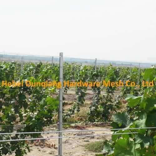 54*30mm 2.5m Vineyard Grape Pile Trellis Stents