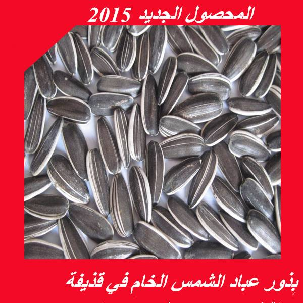 2015 crop raw sunflower seeds for export
