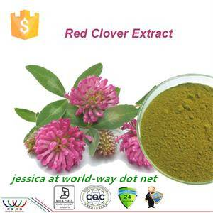 GMP manufacturer 100% natural red clover extract