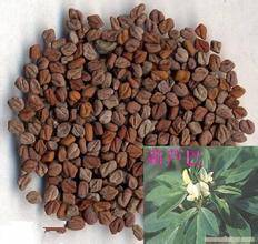 Fenugreek Seed P.E. 4-Hydroxyisoleucine 20% weight control. blood glucose protect