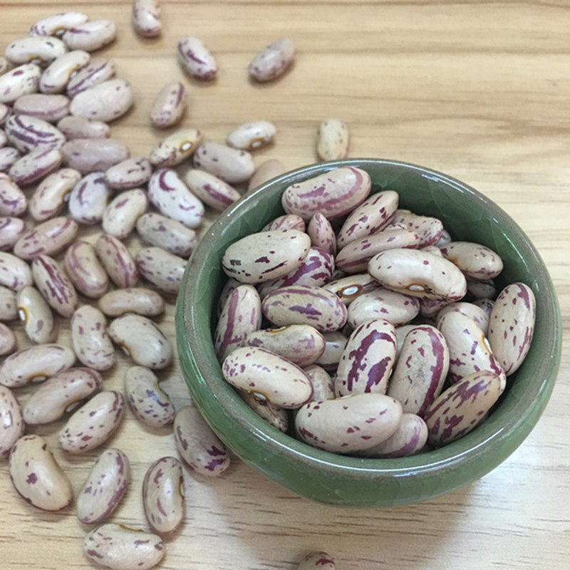 2017 Corp Wholesale Light Speckled Kidney Bean