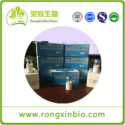 Human Growth Hormone Taitropin 10iu/Vial HGH CAS12629-01-5 Pure Medication Anabolic Steroids Withou