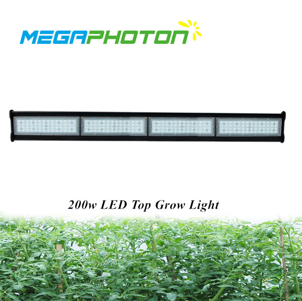 Megaphoton Waterproof IP66 200w 4ft Top Led Grow Light Greenhouse