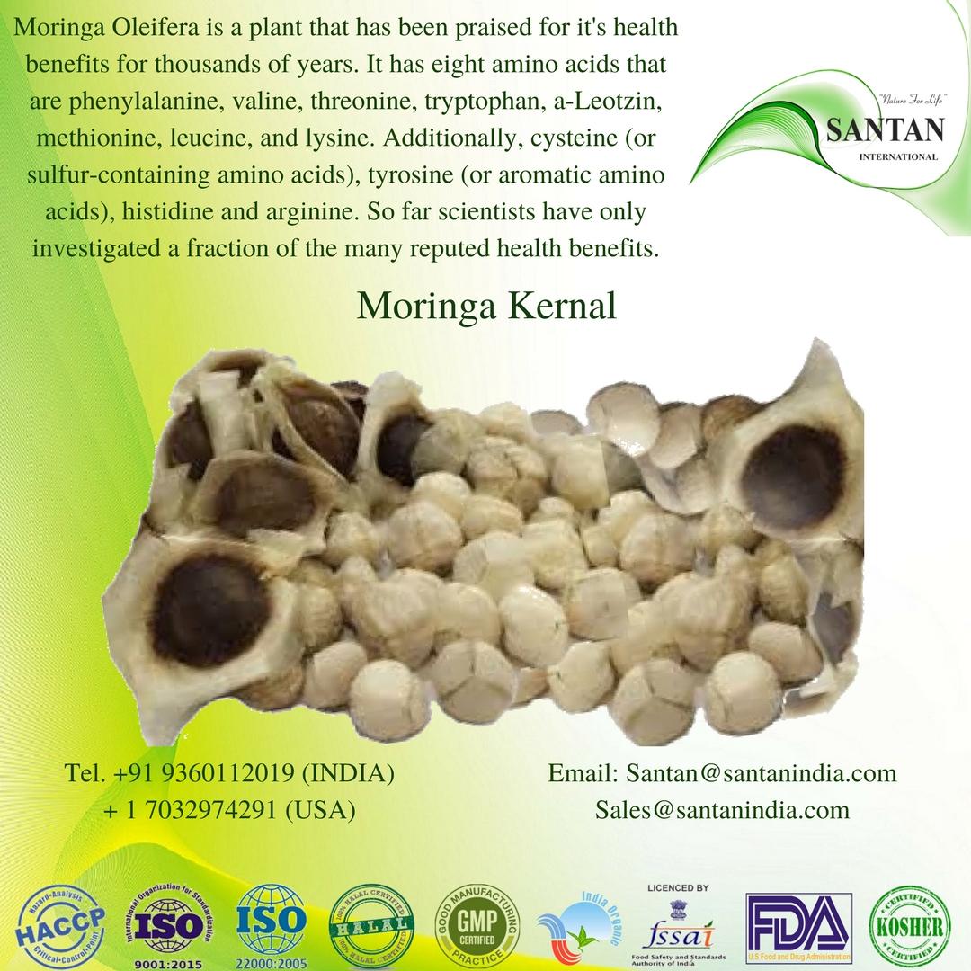 Moringa Seed Kernal
