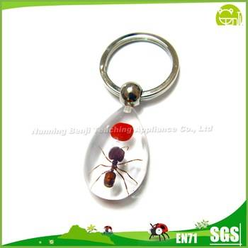Popular Insect Specimen Individuality Small Pendant Keychain Small Pendant