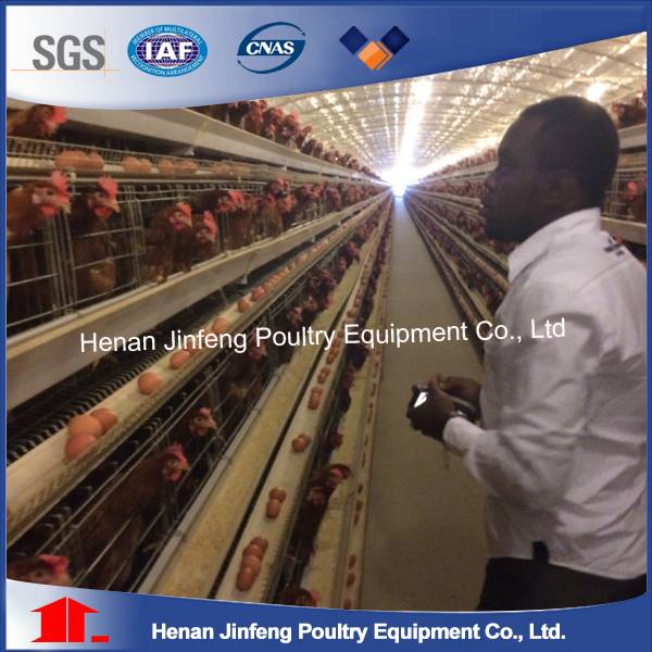 Wire Mesh Solid Structure Poultry Layer Cages Equipment