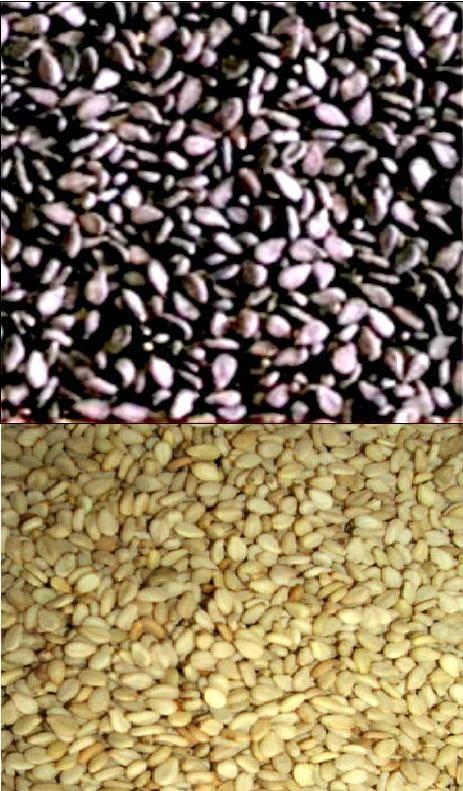 Black & White Sesame Seeds