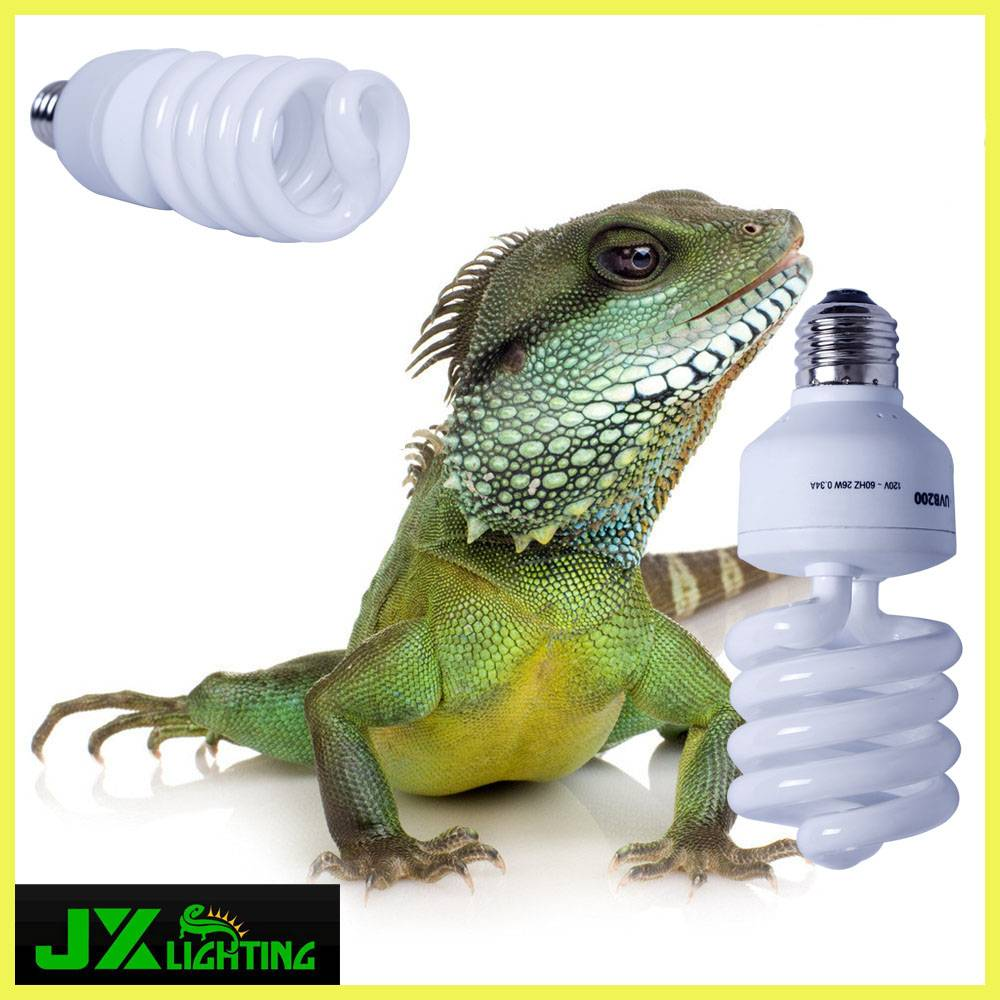 Reptile care and health UVB compact fluorescent bulb
