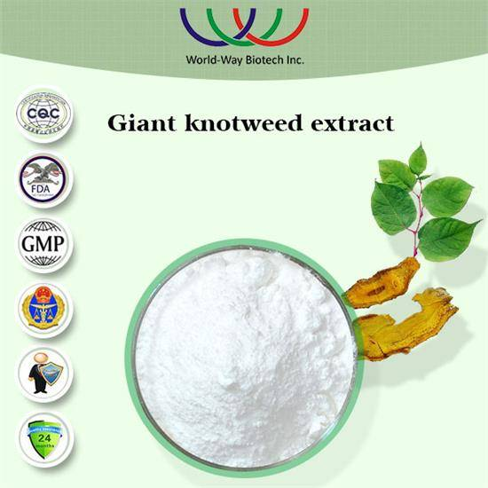 Free sample Chinese herb medicine pure giant knotweed extract resveratrol