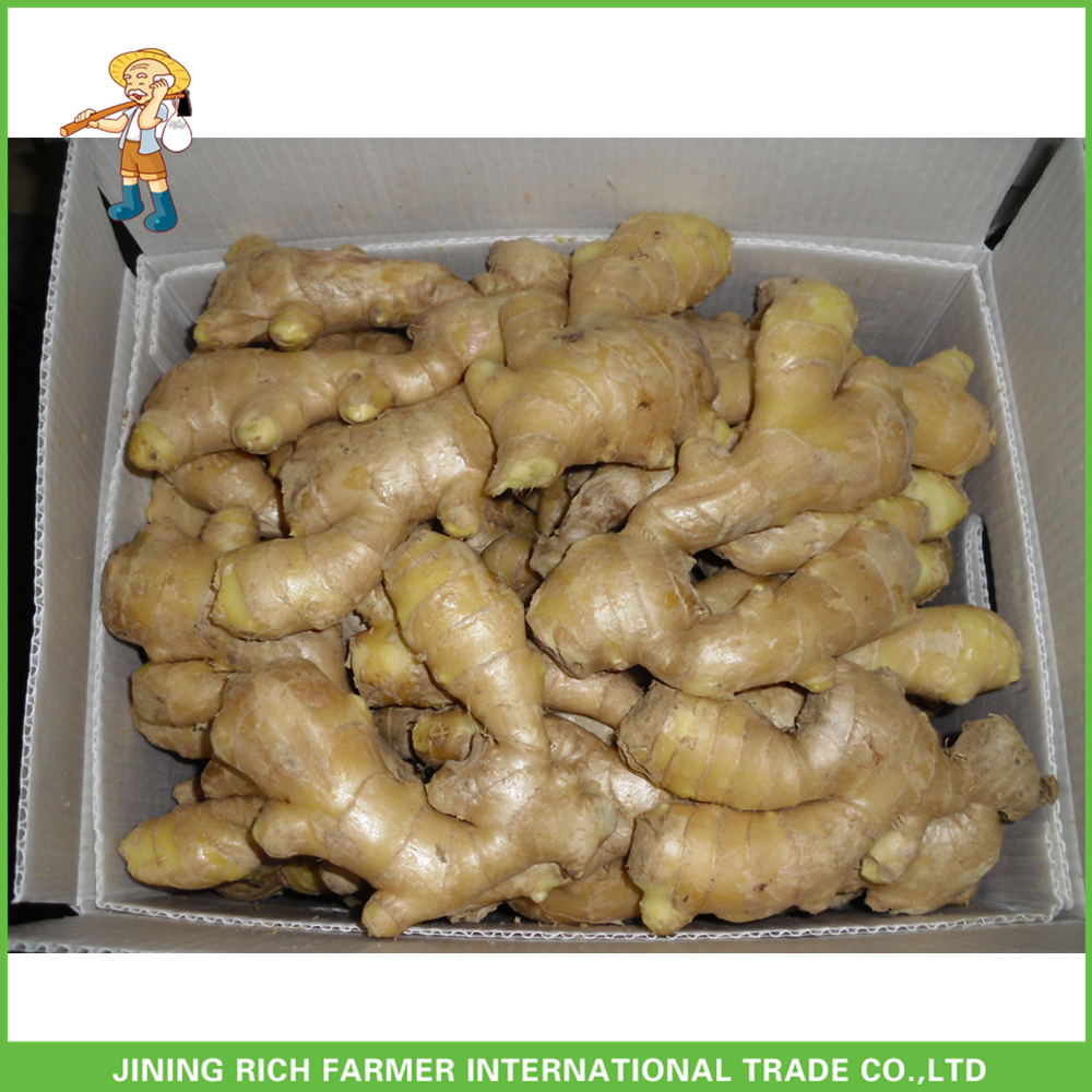 Fresh Ginger 150g/250g and up Price in China