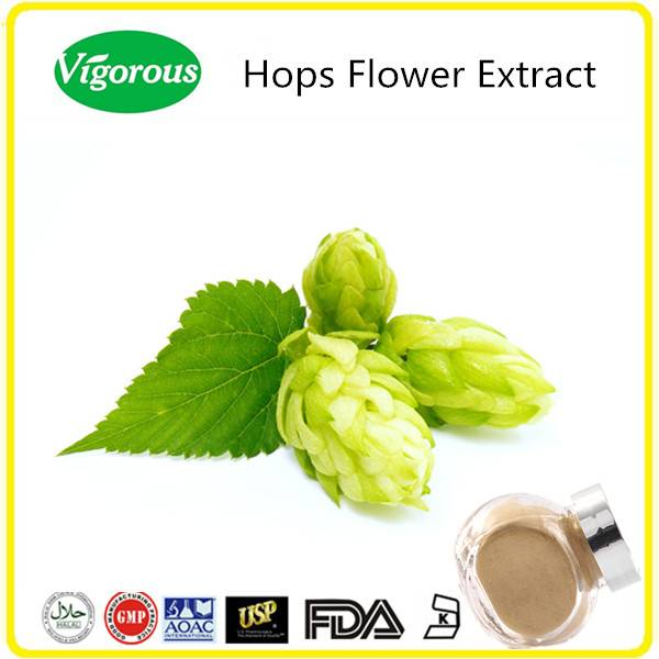 10:1, 0.3% Flavones Hops flower Extract/Humulus Lupulus Extract