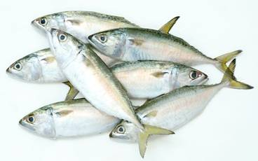 INDIAN MACKEREL WHOLE ROUND