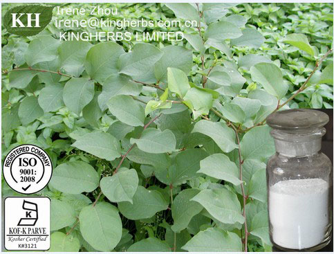Polygonum Cuspidatum Extract /98%Resveratrol