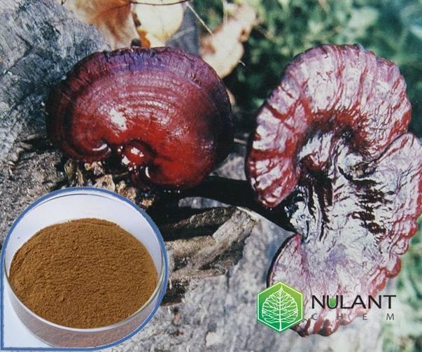 Reishi Mushroom extract 40% Polysaccharides