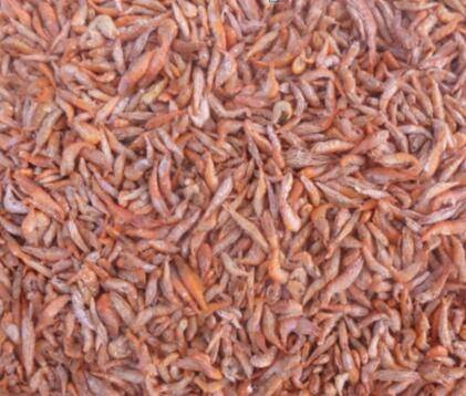 Freeze dried shrimp Red