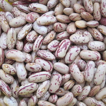 Light Speckled Kidney Pinto Beans