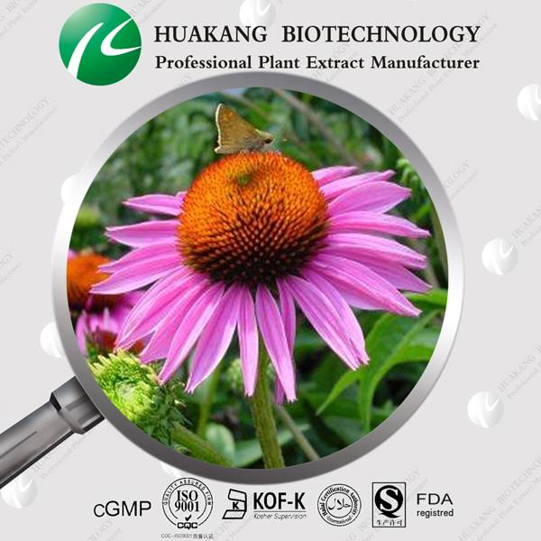 High Qulity Herb Extract Echinacea Purpurea P.E. Powder