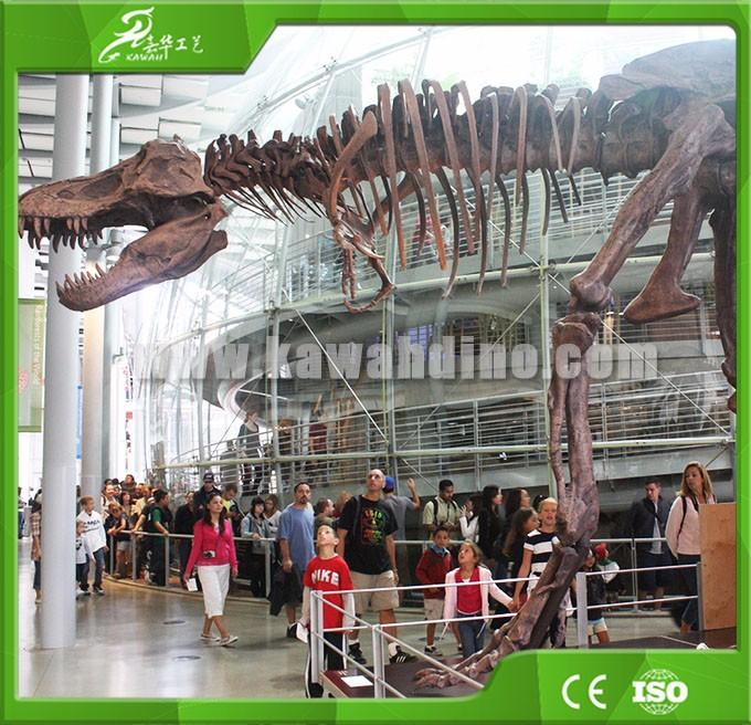 KAWAH Full Size Fiberglass Dinosaur Skeleton Replica & Realistic Full Dinosaur Skeleton