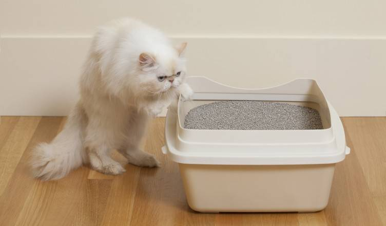 Best Broke Bentonite Kitty Litter and Kitty Sand Pet Toilet For cleaning