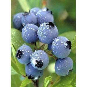 Supply High Quality 100% Natural Chinese Bilberry Extract