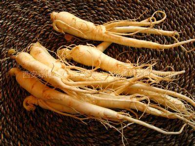 Top quality Ginseng Extract
